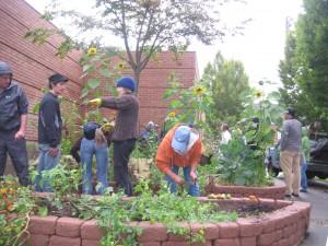 2010BCC garden
