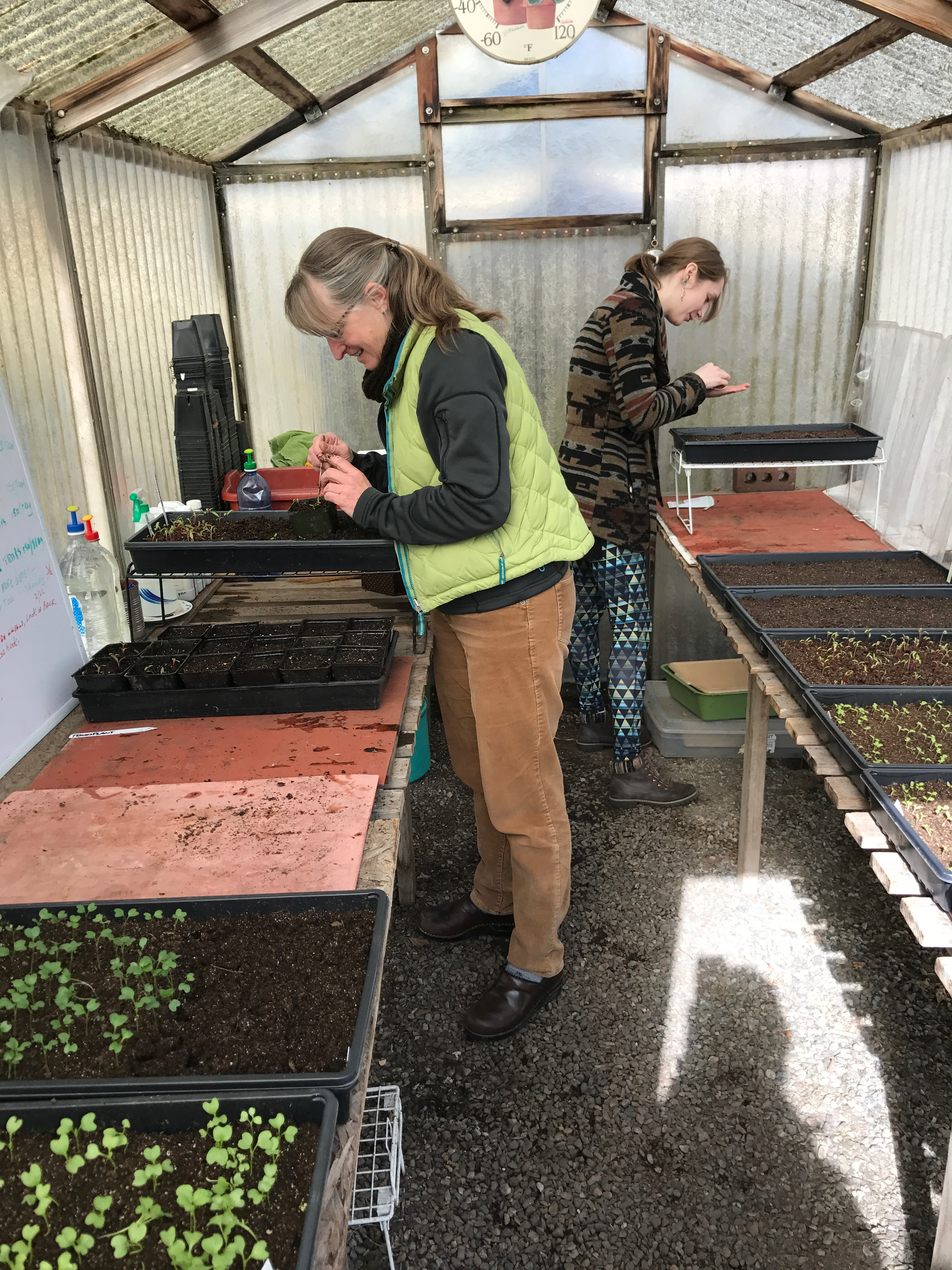 Volunteer Gardeners Plant Vegetable Seeds, Transplant The Sprouts And  Provide The Seattle Giving Gardens With Vegetable Starts.