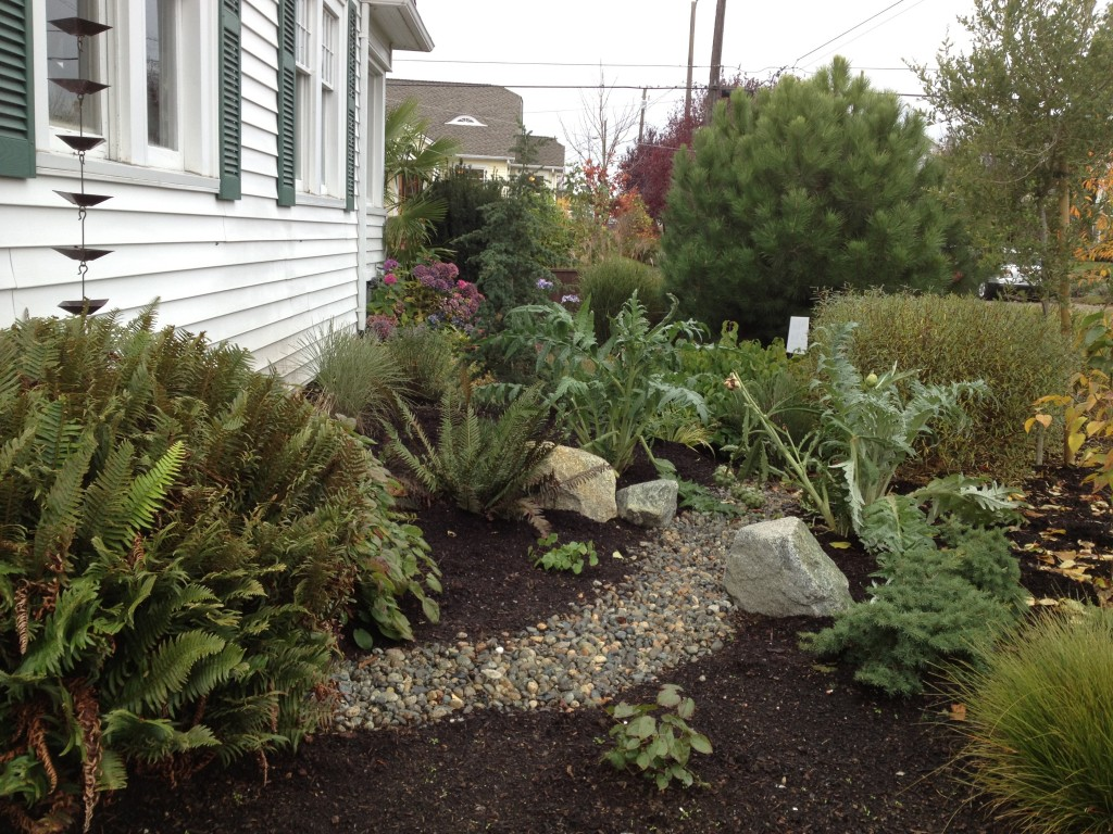 RainWise contractor Nancy Fasoldt integrated the rain garden into her design for the whole yard. Note the rain chain as downspout!