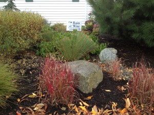 Even in the winter, the rain garden's plantings are colorful!
