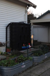 This super-cistern holds 620 gallons. It can water the plantings in the driveway all summer long.