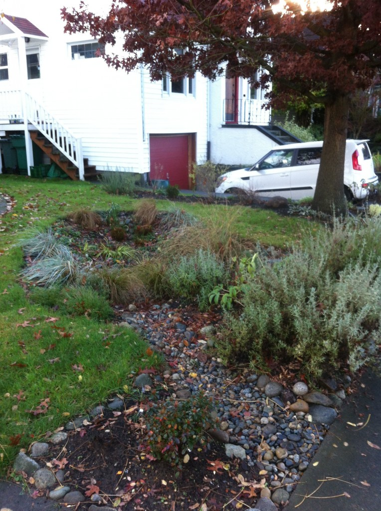 Tom was interested in a rain garden as an interesting landscape feature, and also as a way to reduce the amount of lawn in the yard.