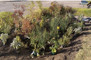The front raingarden plants about to go in.